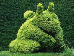 Фигурно подстриженный кустарник в топиарии в Мач Венлок