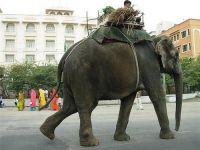 Слоны, конечно, российские :)