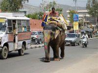 Слоны, как известно, российские